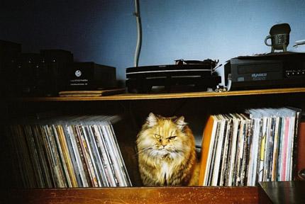 gato_discos
