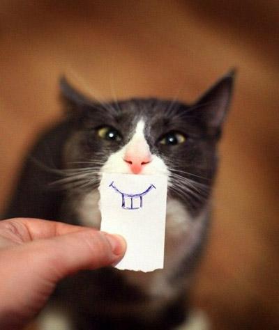 gato_sorriso