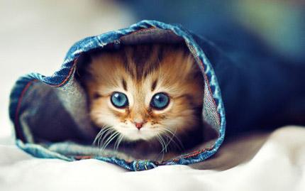 gatos_01