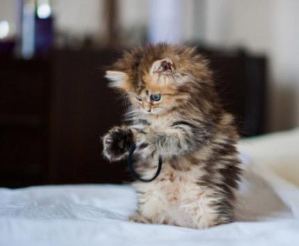 gatos_02