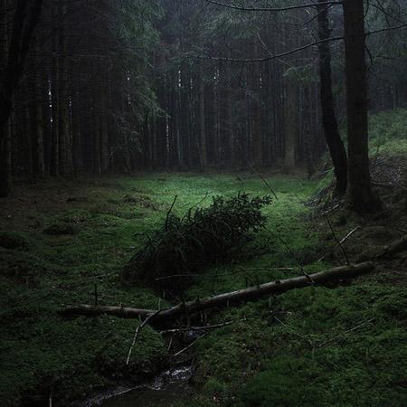 ON - Herbanário Van Richten - Página 2 Floresta_escura-01