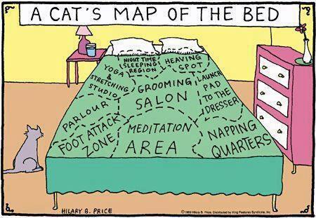 gatos_mapa_na_cama_