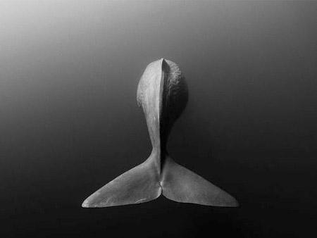 baleia-13