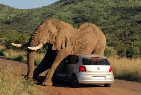 elefante_carro
