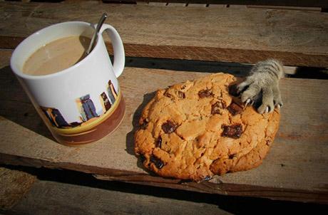 gato_biscoito