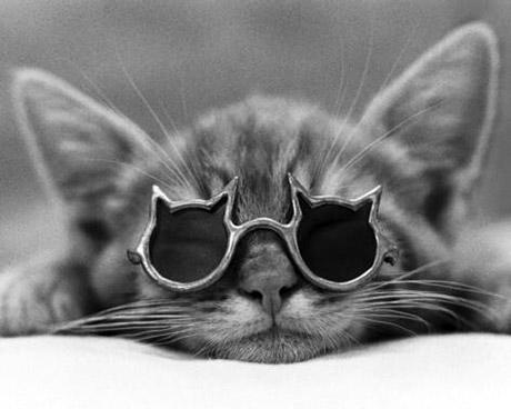 gato_oculos1