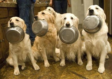 dogs_comida