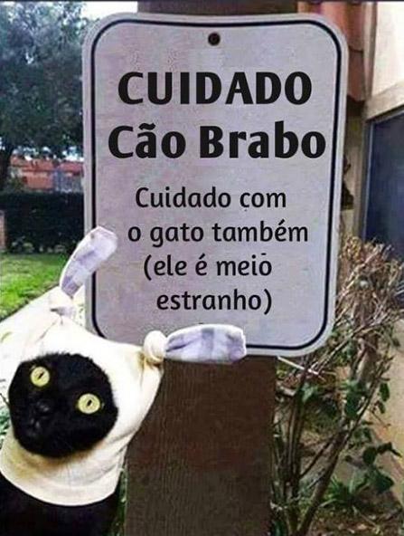 gato_brabo