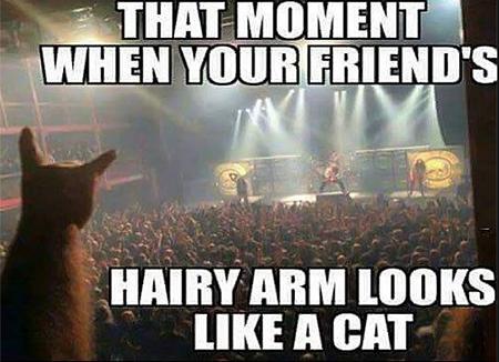 hands_cat