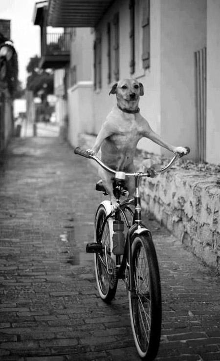 dog_bike1