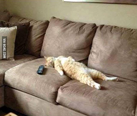 gato_sofa1
