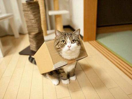 gatobox_10