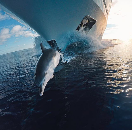 golfinhos_0324