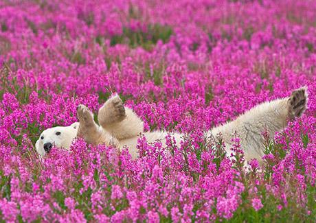 urso_flores