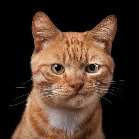 gato_descontente