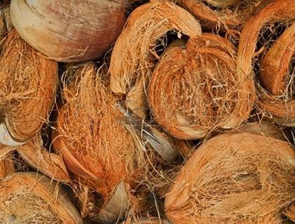fibra-de-coco