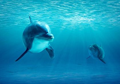 golfinhos_29300