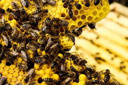 abelhas_1001