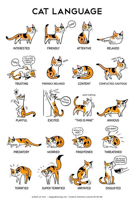 gatos_linguagempp