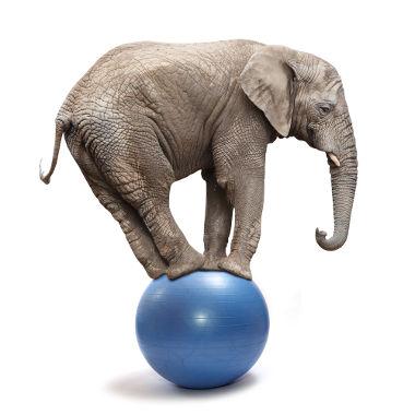 elefante-equilibrado