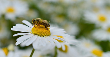 abelhas_5612
